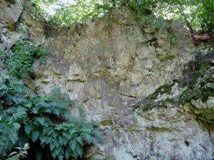 Strandja Mountain Rock