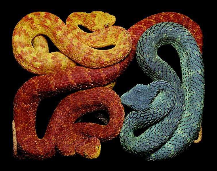 snake symbolism
